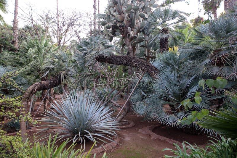 Εξωτικές εγκαταστάσεις στον κήπο Majorelle στοκ εικόνες με δικαίωμα ελεύθερης χρήσης