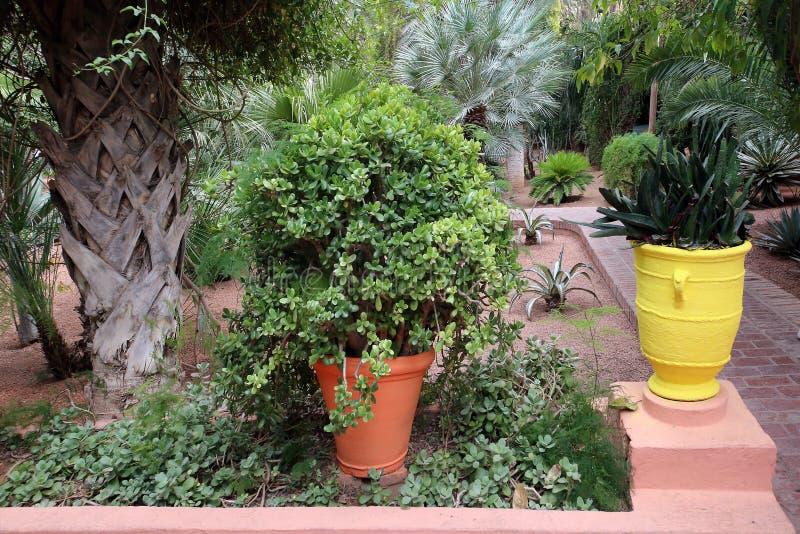 Εξωτικές εγκαταστάσεις στον κήπο Majorelle στοκ φωτογραφίες με δικαίωμα ελεύθερης χρήσης