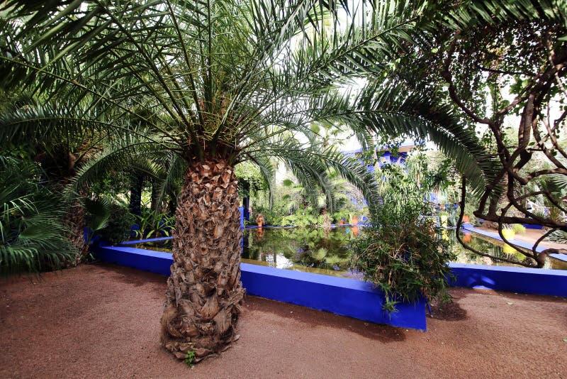 Εξωτικές εγκαταστάσεις στον κήπο Majorelle στοκ φωτογραφία