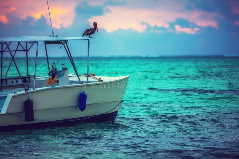 Εξωτική παραλία, pilican πουλί και βάρκα σε Punta, Cana, Δομινικανή Δημοκρατία στοκ εικόνες