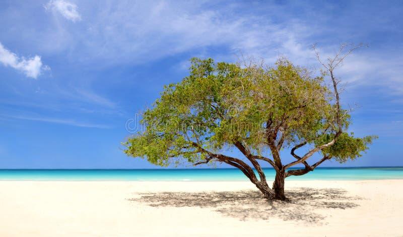 Εξωτική παραλία Punta Cana, Δομινικανή Δημοκρατία στοκ φωτογραφία