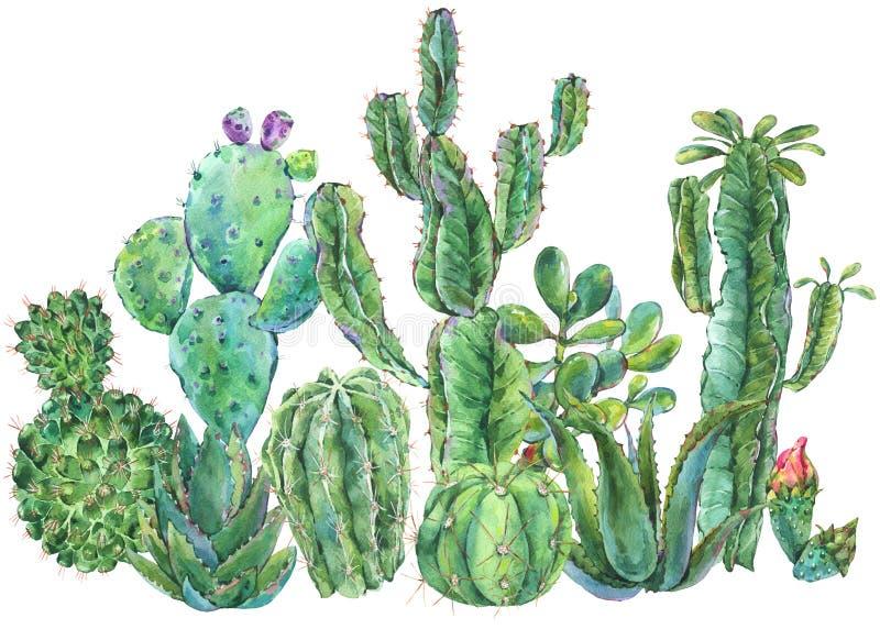 Εξωτική φυσική εκλεκτής ποιότητας ευχετήρια κάρτα κάκτων watercolor διανυσματική απεικόνιση