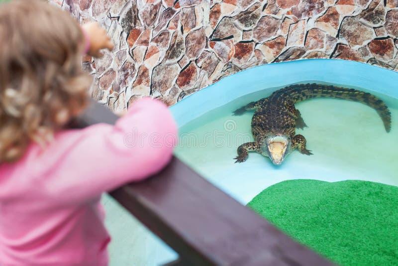 Εξωτικός ζωολογικός κήπος, παιδάκι που εξετάζει τον κροκόδειλο στοκ φωτογραφία