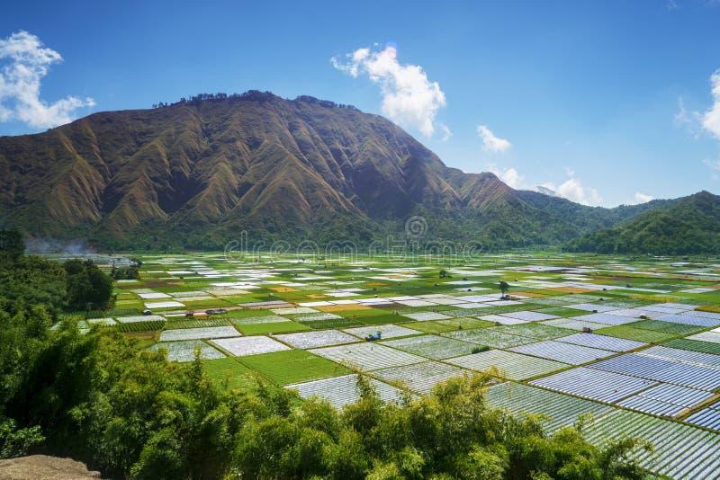 Εξωτικός λόφος Rinjani με το ζωηρόχρωμο καλλιεργήσιμο έδαφος στοκ φωτογραφίες
