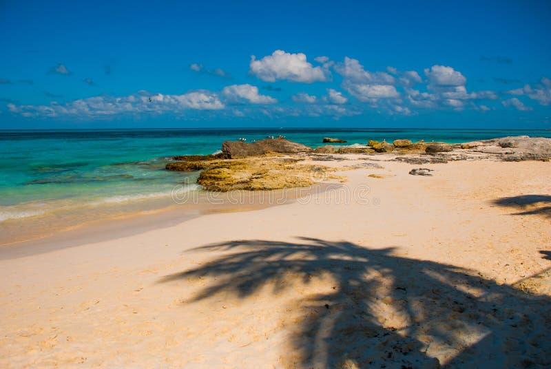 Εξωτικός παράδεισος θέρετρο τροπικό Καραϊβικός λιμενοβραχίονας θάλασσας κοντά σε Cancun Παραλία του Μεξικού τροπική στις Καραϊβικ στοκ φωτογραφία με δικαίωμα ελεύθερης χρήσης