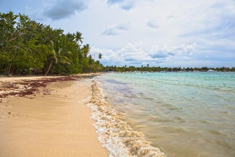 Εξωτικός φοίνικας σε μια παραλία σε Δομινικανό στοκ εικόνα με δικαίωμα ελεύθερης χρήσης