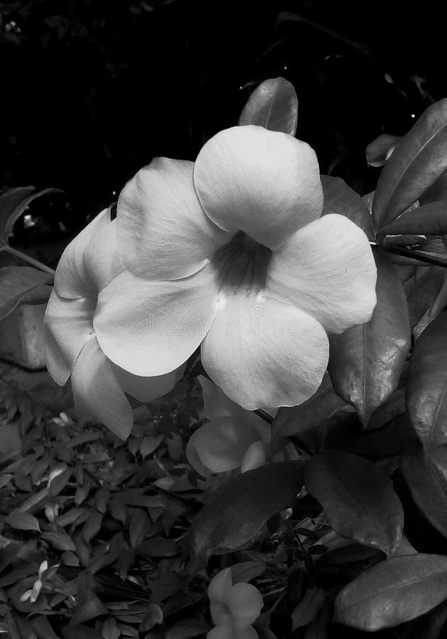 εξωτικό λουλούδι απεικόνιση αποθεμάτων
