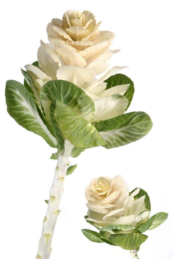 εξωτικό λουλούδι στοκ φωτογραφία με δικαίωμα ελεύθερης χρήσης