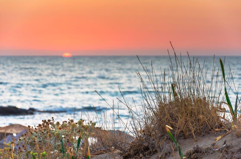 Εξωτικό νησί Chryssi στο νότο της Κρήτης, με την καταπληκτική χρυσή παραλία, Ελλάδα στοκ φωτογραφία με δικαίωμα ελεύθερης χρήσης