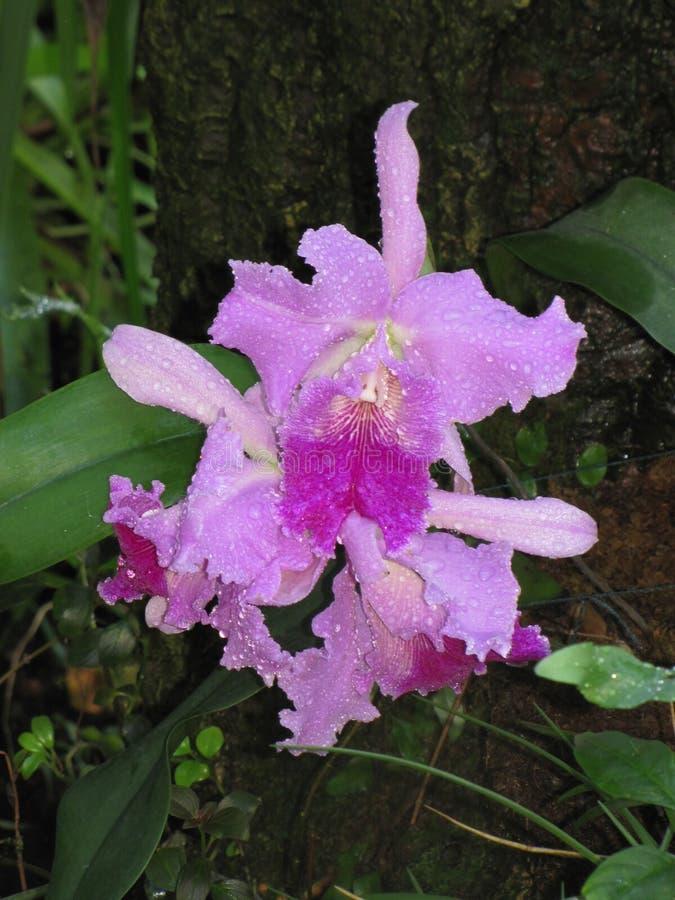 Εξωτικό πορφυρό λουλούδι που χρειάζεται ένα όνομα στοκ φωτογραφίες με δικαίωμα ελεύθερης χρήσης