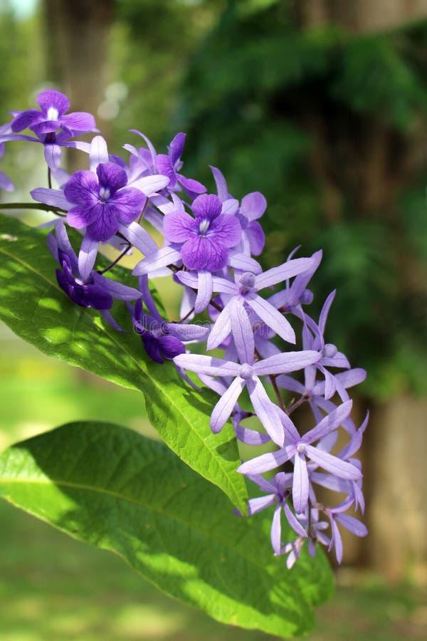 Εξωτικό πορφυρό τροπικό λουλούδι στοκ εικόνες