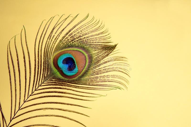 Εξωτικό φτερό peacock, με το διάστημα για το αντίγραφο στοκ φωτογραφία με δικαίωμα ελεύθερης χρήσης