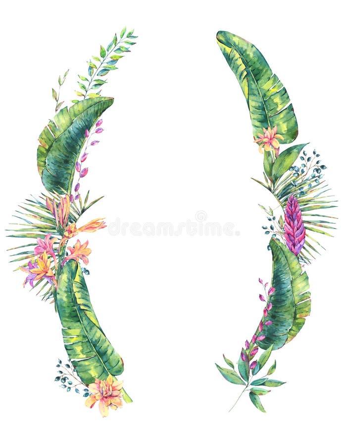 Εξωτικό φυσικό εκλεκτής ποιότητας στεφάνι watercolor των φύλλων μπανανών διανυσματική απεικόνιση