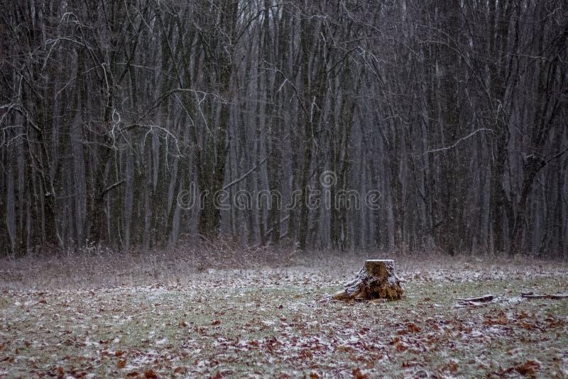 Εξόγκωμα σε έναν χιονώδη χορτοτάπητα Χειμερινή ημέρα στο woods_ στοκ φωτογραφία με δικαίωμα ελεύθερης χρήσης