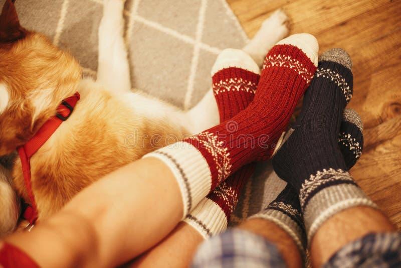 Εορταστικές κάλτσες στα πόδια ζευγών και χαριτωμένη χρυσή συνεδρίαση σκυλιών στο floo στοκ εικόνα