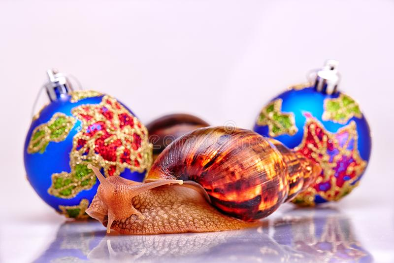 Εορταστική νέα έννοια ετών με τα σαλιγκάρια και τις σφαίρες Χριστουγέννων στο άσπρο υπόβαθρο στοκ εικόνες με δικαίωμα ελεύθερης χρήσης