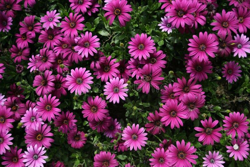 επάνω από τα λουλούδια στοκ φωτογραφία με δικαίωμα ελεύθερης χρήσης