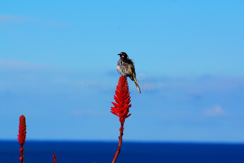 επάνω από τον ωκεανό λουλουδιών πουλιών στοκ φωτογραφία