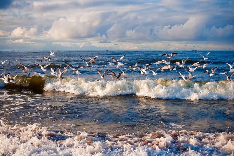 επάνω από seagulls θάλασσας στοκ φωτογραφίες