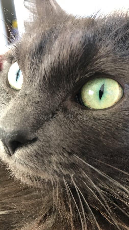 Επάνω στη στενή γάτα ξυλάνθρακα στοκ φωτογραφίες με δικαίωμα ελεύθερης χρήσης