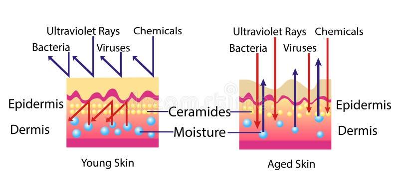 Επίδραση του περιβάλλοντος στο δέρμα, διανυσματικό διάγραμμα για τη cosmetological απεικόνιση απεικόνιση αποθεμάτων