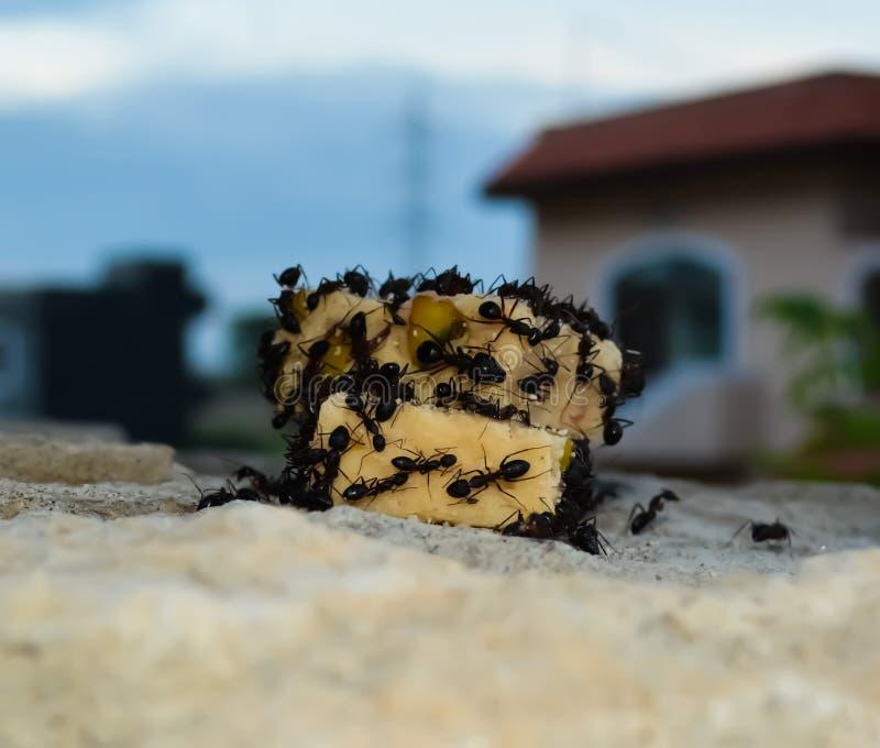 Επίθεση μυρμηγκιών στοκ φωτογραφία με δικαίωμα ελεύθερης χρήσης