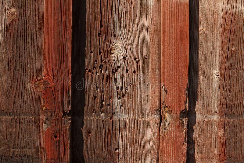 Επίθεση τερμιτών στο ξύλο προσόψεων σε Umea στοκ φωτογραφίες με δικαίωμα ελεύθερης χρήσης