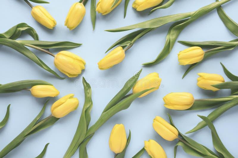 Επίπεδος βάλτε τα λουλούδια άνοιξη Κίτρινα λουλούδια τουλιπών στο μπλε υπόβαθρο Τοπ όψη Ελάχιστη floral χλεύη επάνω στην έννοια στοκ εικόνες