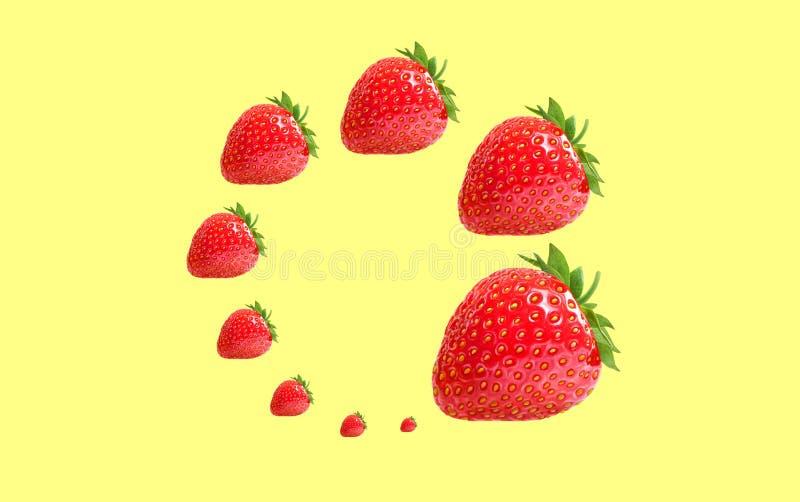 Επίπεδος βάλτε τη σπειροειδή σύνθεση με το μούρο φραουλών στο άσπρο υπόβαθρο ελεύθερη απεικόνιση δικαιώματος