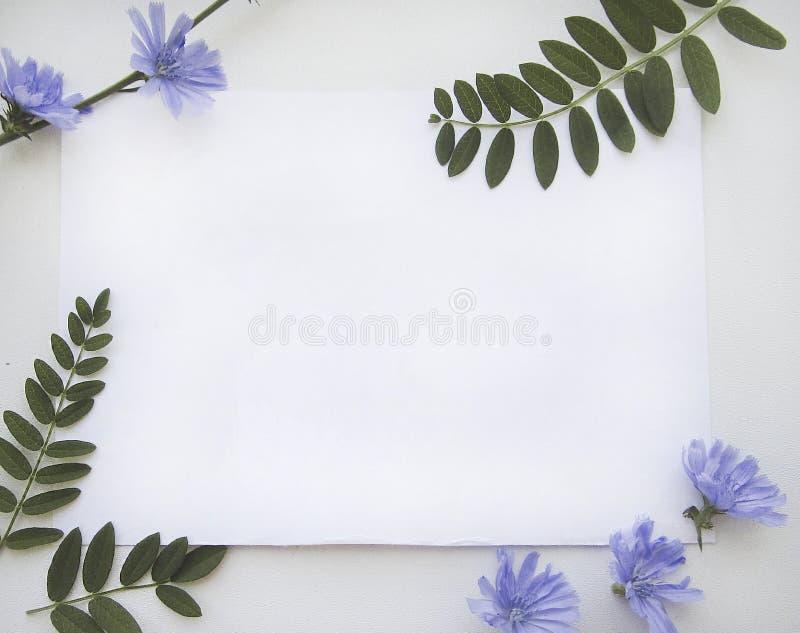 Επίπεδος βάλτε τη σύνθεση με ένα φύλλο της Λευκής Βίβλου, των μπλε λουλουδιών ραδικιού και των πράσινων φύλλων απεικόνιση αποθεμάτων