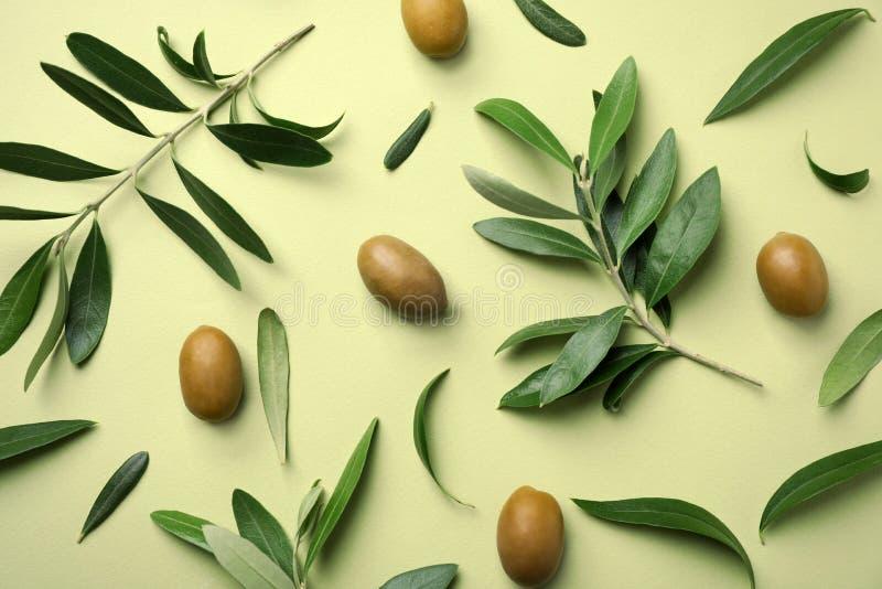 Επίπεδος βάλτε τη σύνθεση με τα φρέσκα πράσινα φύλλα, τους κλαδίσκους και τα φρούτα ελιών στοκ εικόνες