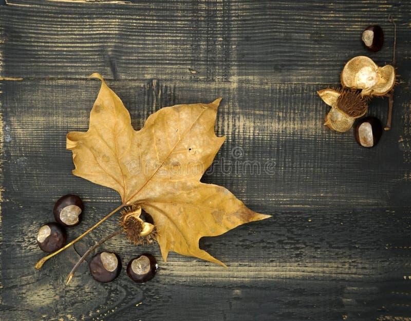 Επίπεδος βάλτε τη σύνθεση φθινοπώρου με το χρυσά φύλλο και τα κάστανα στο σκοτεινό ξύλινο υπόβαθρο στοκ εικόνα με δικαίωμα ελεύθερης χρήσης