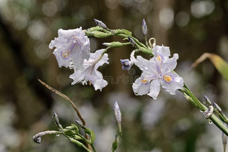 Επίπεδα λουλούδια μπαμπού στοκ εικόνες