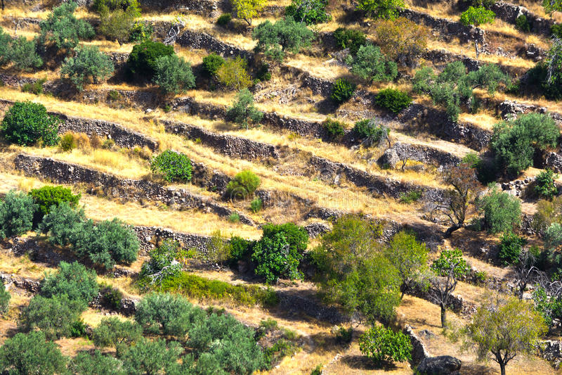 Επίπεδα Croplands στοκ εικόνες