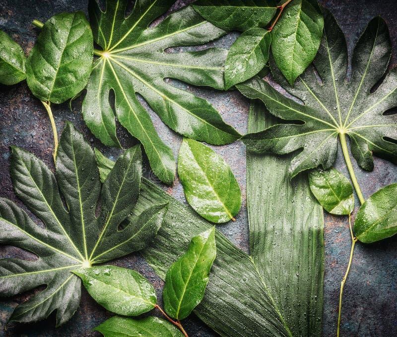Επίπεδος βάλτε των τροπικών φύλλων ζουγκλών με τις πτώσεις βροχής στοκ εικόνες