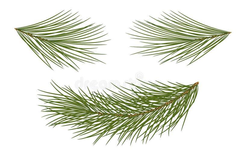 επίσης corel σύρετε το διάνυσμα απεικόνισης 10 eps Σύνολο κλάδων πεύκων για τον εορταστικό Δεκέμβριο ελεύθερη απεικόνιση δικαιώματος