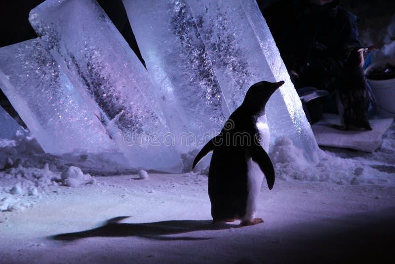 Επίσκεψη στο βιο θόλο του Μόντρεαλ - Penguins στοκ εικόνες