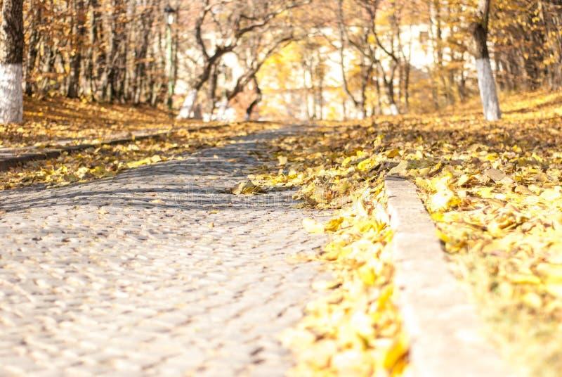 Επίστρωση στο φθινόπωρο στοκ φωτογραφίες με δικαίωμα ελεύθερης χρήσης