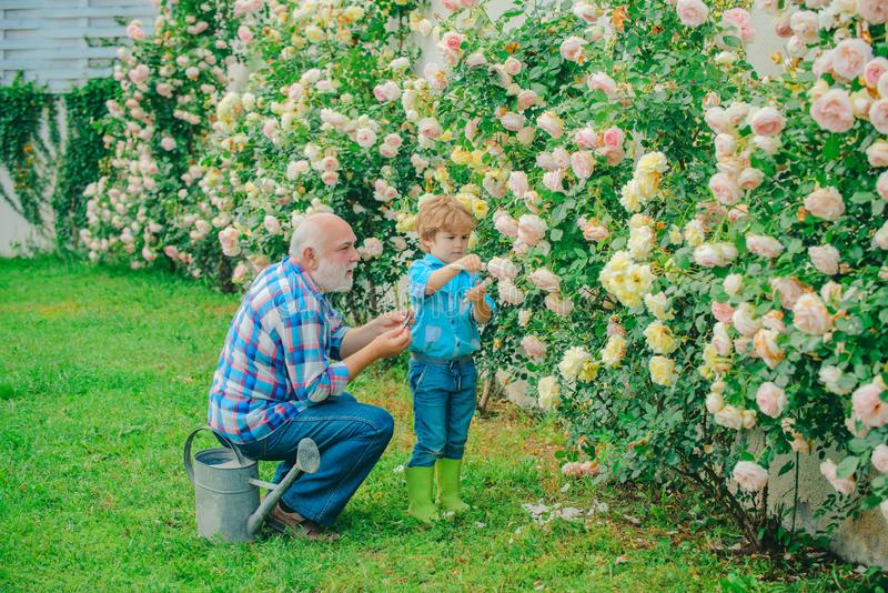 Επαγγελματίας κηπουρός στην εργασία Ο κηπουρός κόβει λουλούδια στον κήπο του Συνταξιοδοτικός σχεδιασμός Δημιουργία Ο μπαμπάς διδά στοκ φωτογραφίες