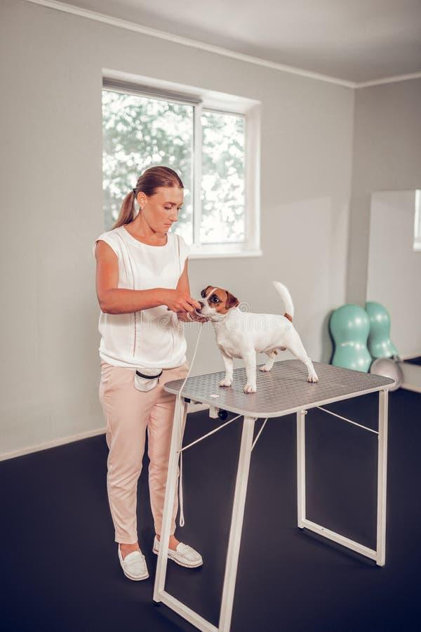 Επαγγελματικός κτηνίατρος που εξετάζει λίγο χαριτωμένο σκυλί που στέκεται στην ταμπλέτα στοκ φωτογραφίες