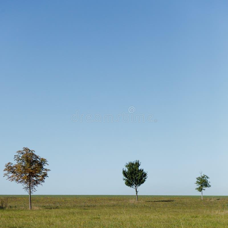 επαρχία τρία δέντρα στοκ εικόνα με δικαίωμα ελεύθερης χρήσης