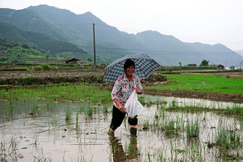Επαρχία Wuyan στοκ εικόνα