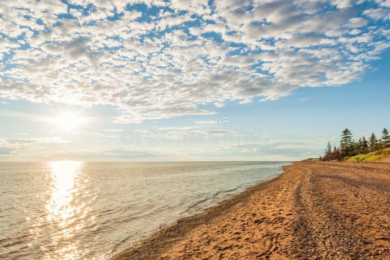 Επαρχιακή παραλία Park's αμμόλοφων κέδρων στοκ φωτογραφίες