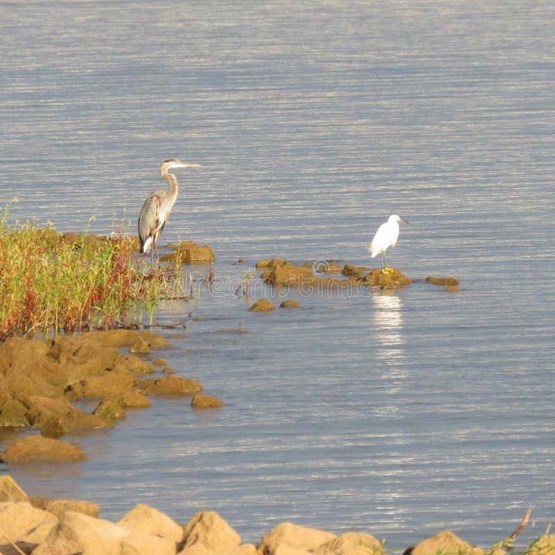 Επενδυμένοι με φτερά αλιεύοντας φιλαράκοι στοκ φωτογραφίες