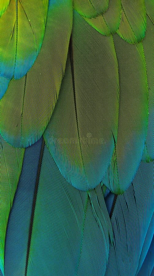 επενδύει με φτερά macaw στοκ φωτογραφία με δικαίωμα ελεύθερης χρήσης