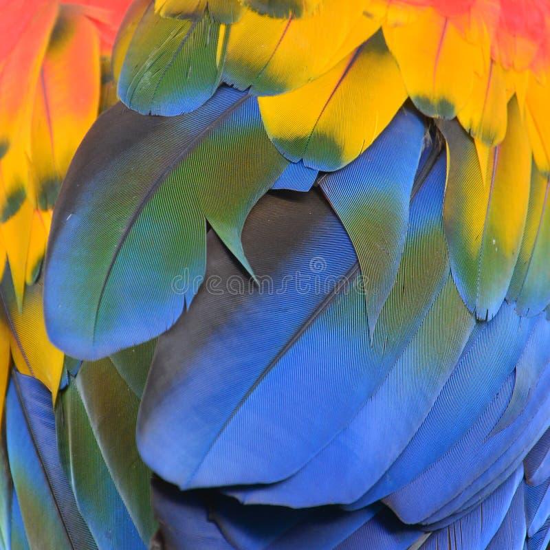 επενδύει με φτερά prinnie στοκ εικόνα