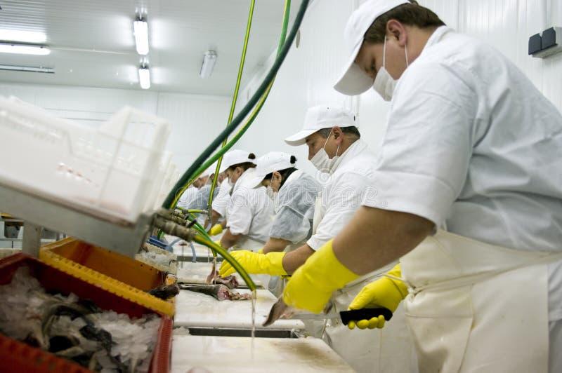 επεξεργασία γραμμών τροφί&m στοκ εικόνα με δικαίωμα ελεύθερης χρήσης