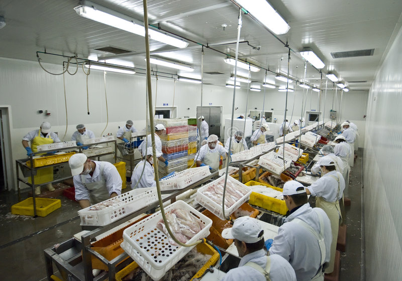 επεξεργασία ψαριών εργοστασίων στοκ φωτογραφίες