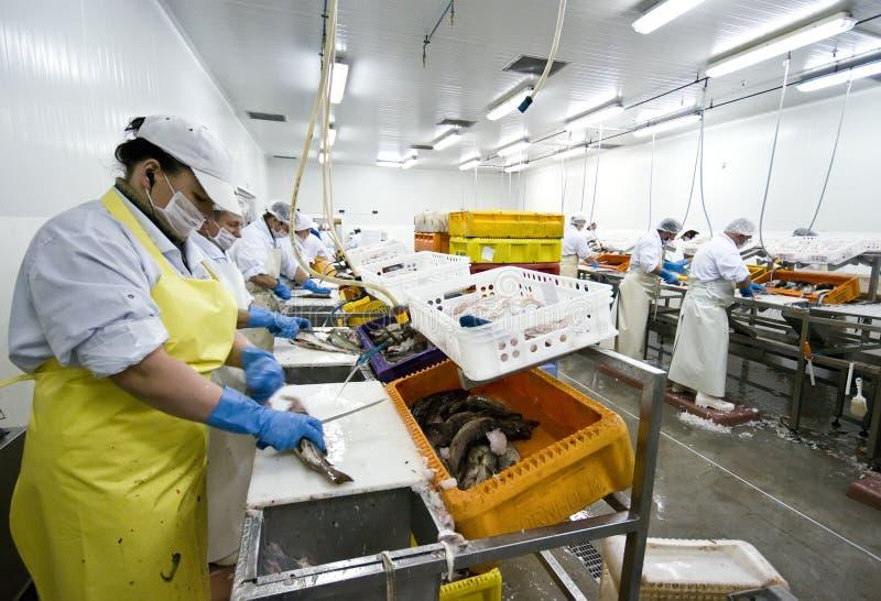 επεξεργασία ψαριών εργο& στοκ φωτογραφία