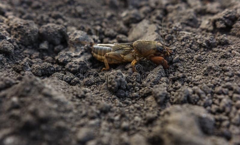 Επιβλαβές έντομο, γεωργικός έλεγχος παρασίτων παρασίτων στοκ εικόνες